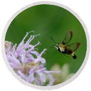Clearwing Moth Round Beach Towel