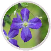 Clematis Jenny Round Beach Towel