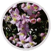 Clematis Montana  In Full Bloom Round Beach Towel