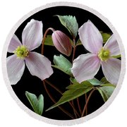 Round Beach Towel featuring the photograph Clematis Montana Rubens by Terence Davis