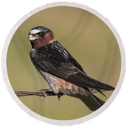 Cliff Swallow Round Beach Towel