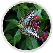 Clipper Butterfly On Star Flower Round Beach Towel