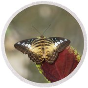 Round Beach Towel featuring the photograph Clipper Butterfly by Paul Gulliver