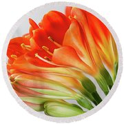 Clivia Miniata 2 Round Beach Towel by Shirley Mitchell