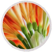 Clivia Miniata 5 Round Beach Towel by Shirley Mitchell