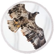 Close Call  With A Bald Eagle Round Beach Towel