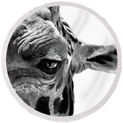 Round Beach Towel featuring the photograph Close Encounter by Marion Cullen