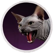 Close-up Aggressive Sphynx Cat Hisses On Purple Round Beach Towel