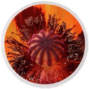 Close-up Bud Of A Red Poppy Flower Round Beach Towel