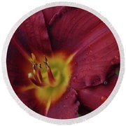 Close Up Day Lily Round Beach Towel