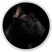 Close-up French Bulldog Dog Like Monster In Profile View Isolated Round Beach Towel