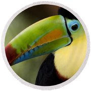 Close-up Of Keel-billed Toucan Round Beach Towel by Panoramic Images