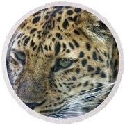 Close Up Of Leopard Round Beach Towel