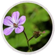 Close Up Of Shining Cranesbill A Round Beach Towel
