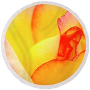 Close Up Of Yellow And Pink Rose Round Beach Towel by Teri Virbickis