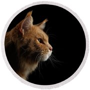 Close-up Portrait Ginger Maine Coon Cat Isolated On Black Background Round Beach Towel