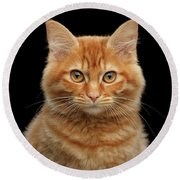 Close-up Portrait Of Ginger Kitty On Black Round Beach Towel