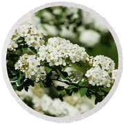 Round Beach Towel featuring the photograph Close-up White Spirea Bush by Cristina Stefan