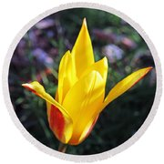 Close Up Yellow And Red Tulip Round Beach Towel