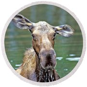 Close Wet Moose Round Beach Towel