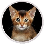 Closeup Abyssinian Kitty Curious Looking In Camera, Isolated Black Background Round Beach Towel