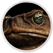 Closeup Cane Toad - Bufo Marinus, Giant Neotropical Or Marine Toad Isolated On Black Background Round Beach Towel