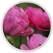 Closeup Deep Peony Pink Ranunculus Round Beach Towel
