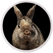 Closeup Funny Little Rabbit, Brown Fur, Isolated On Black Backgr Round Beach Towel