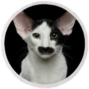 Closeup Funny Oriental Shorthair Looking At Camera Isolated, Bla Round Beach Towel