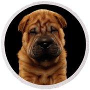 Closeup Funny Sharpei Puppy Isolated On Black Round Beach Towel by Sergey Taran