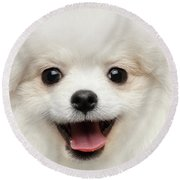 Closeup Furry Happiness White Pomeranian Spitz Dog Curious Smiling Round Beach Towel