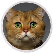 Closeup Golden British Cat With  Green Eyes On Gray Round Beach Towel by Sergey Taran