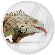 Closeup Green Iguana Showing Tongue On White Round Beach Towel