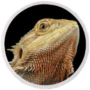 Closeup Head Of Bearded Dragon Llizard, Agama, Isolated Black Background Round Beach Towel by Sergey Taran