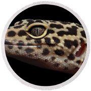 Closeup Head Of Leopard Gecko Eublepharis Macularius Isolated On Black Background Round Beach Towel by Sergey Taran