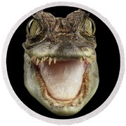 Closeup Head Of Young Cayman Crocodile , Reptile With Opened Mouth Isolated On Black Background, Fro Round Beach Towel by Sergey Taran