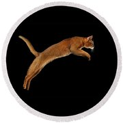 Closeup Jumping Abyssinian Cat Isolated On Black Background In Profile Round Beach Towel