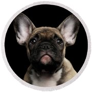 Closeup Portrait French Bulldog Puppy, Cute Looking In Camera Round Beach Towel