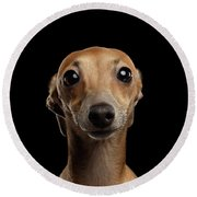 Closeup Portrait Italian Greyhound Dog Looking In Camera Isolated Black Round Beach Towel