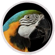 Closeup Portrait Of A Blue And Yellow Macaw Parrot Face Isolated On Black Background Round Beach Towel