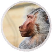 Round Beach Towel featuring the photograph Closeup Portrait Of A Male Baboon by Nick Biemans