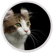 Closeup Portrait Of American Curl Cat On Black Isolated Background Round Beach Towel