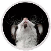 Closeup Portrait Of Cornish Rex Looking Up Isolated On Black  Round Beach Towel