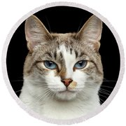 Closeup Portrait Of Face White Cat, Blue Eyes Isolated Black Background Round Beach Towel