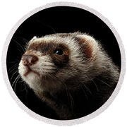 Closeup Portrait Of Funny Ferret Looking At The Camera Isolated On Black Background, Front View Round Beach Towel