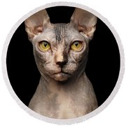 Closeup Portrait Of Grumpy Sphynx Cat, Front View, Black Isolate Round Beach Towel