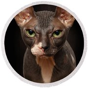 Closeup Portrait Of Grumpy Sphynx Cat Front View On Black  Round Beach Towel by Sergey Taran