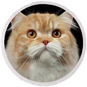 Closeup Portrait Of Red Big Persian Cat Angry Looking On Black Round Beach Towel