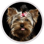 Closeup Portrait Of Yorkshire Terrier Dog On Black Background Round Beach Towel