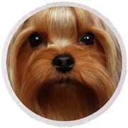 Closeup Portrait Yorkshire Terrier Dog On Black Round Beach Towel by Sergey Taran